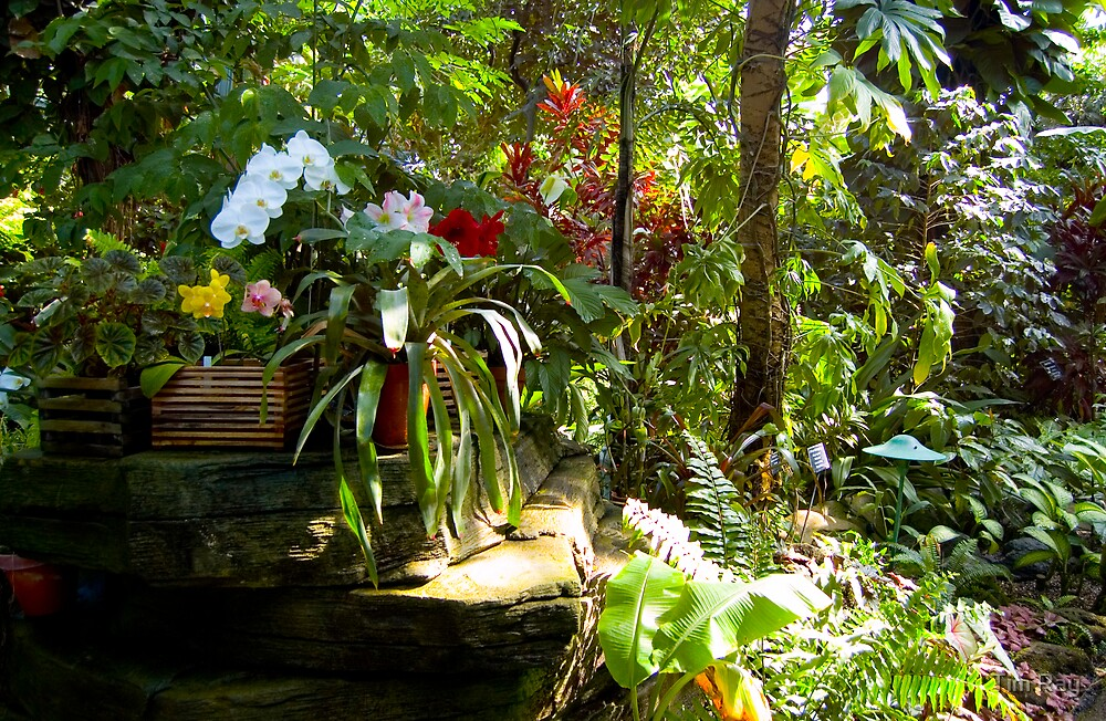Tropical Garden by Tim Ray