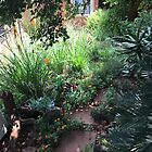 My garden is turning into a jungle! by Hedgie's Nature & Gardening Journal
