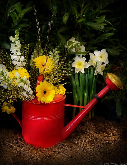 Watering can by Michael Savad