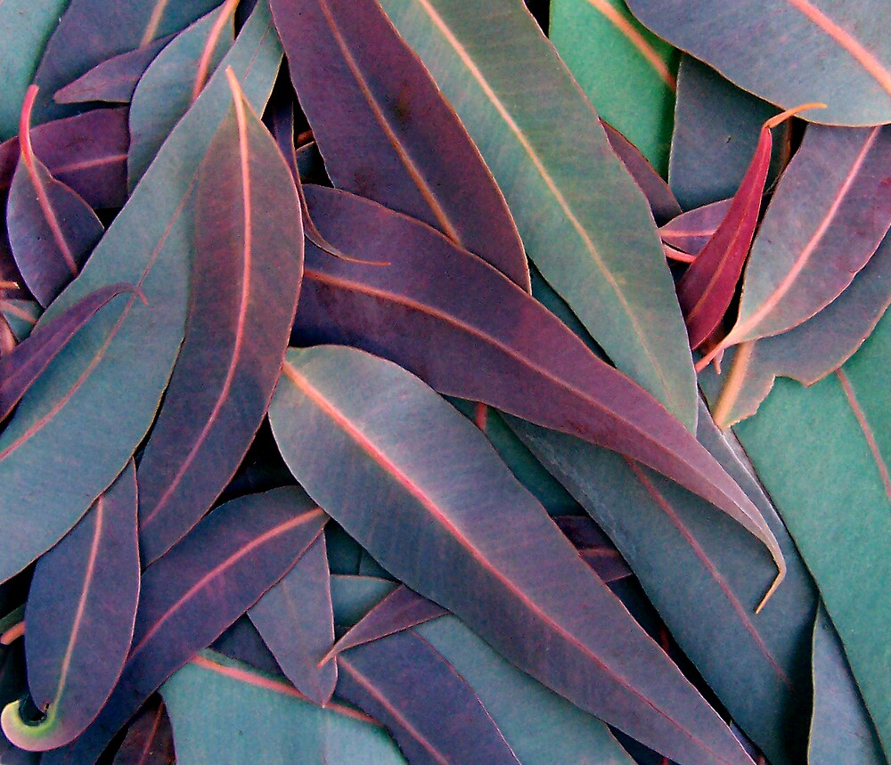 Purple Gum Leaves by EucalyptPhoto