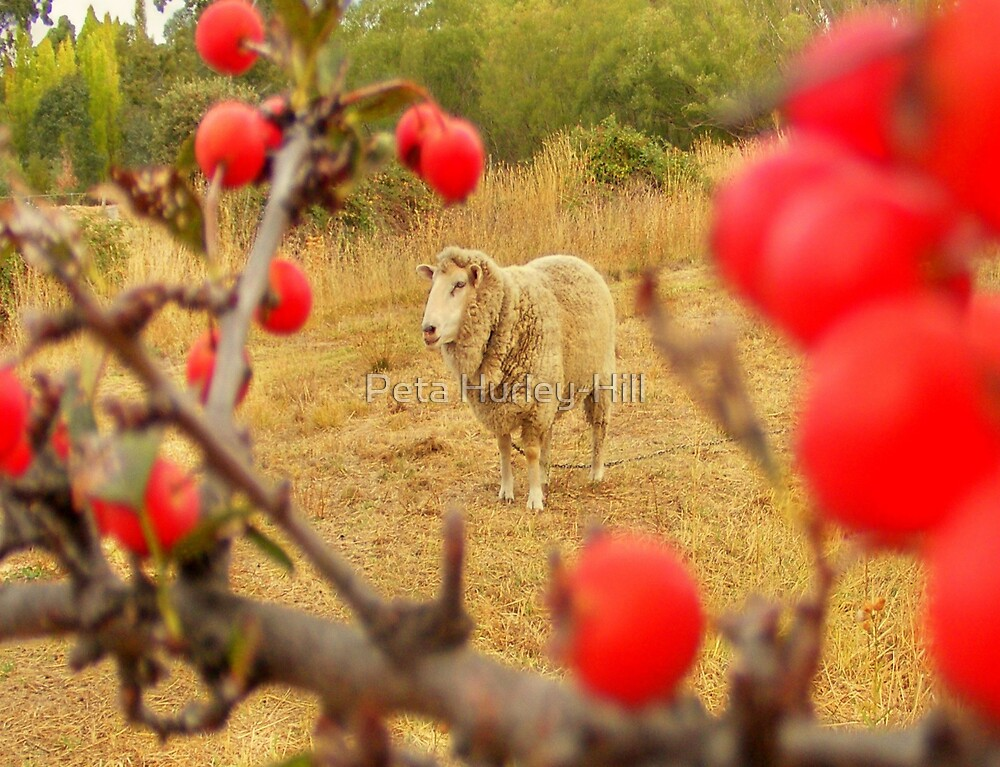 spike with red berries by Peta Hurley-Hill
