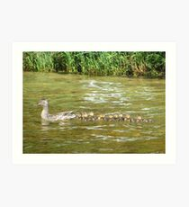 A Dozen Ducklings Art Print
