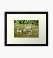 A Dozen Ducklings Framed Print
