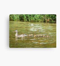 A Dozen Ducklings Canvas Print