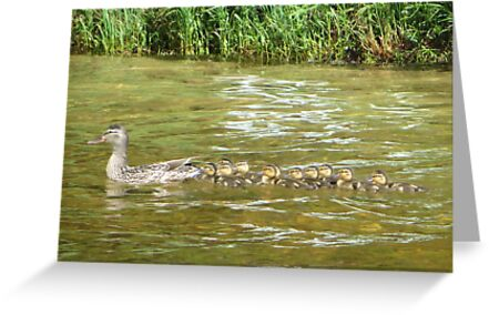 A Dozen Ducklings by Thomas Murphy