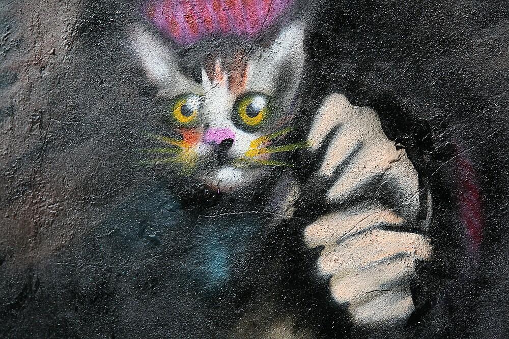 scaredy cat? by jayview