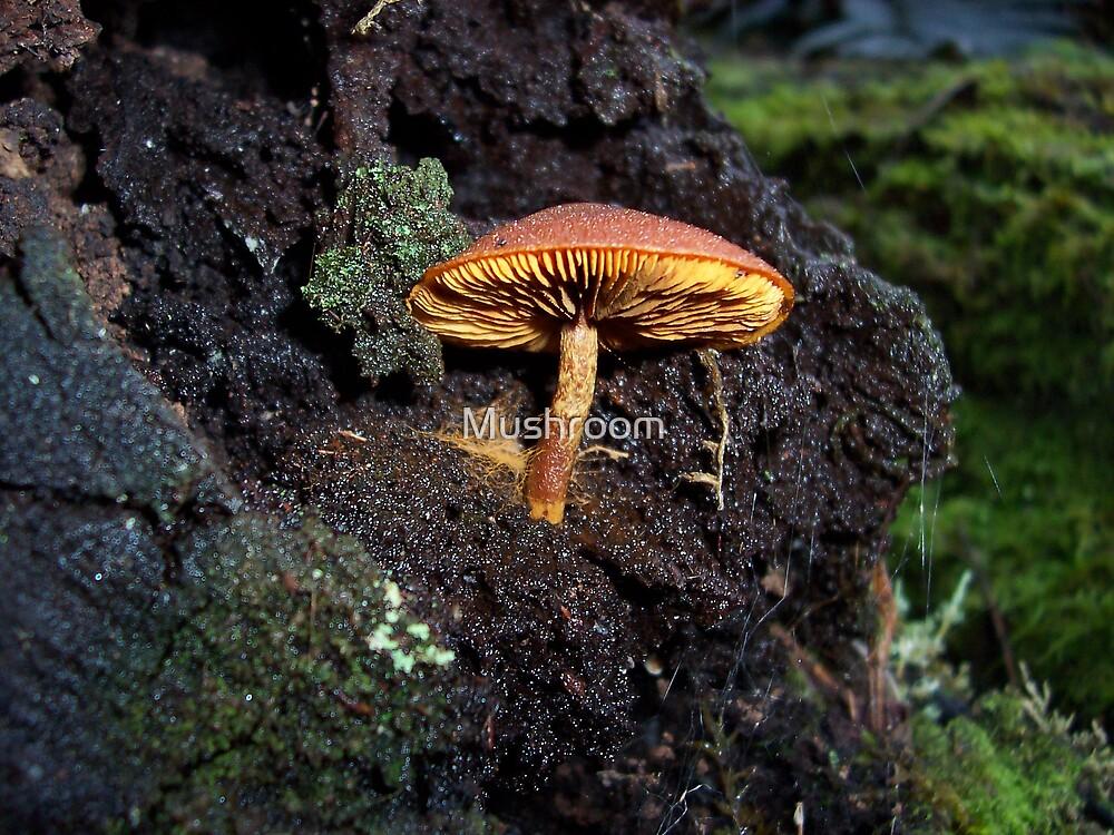 Hidden wonder by Kelvin R Morgan by Mushroom