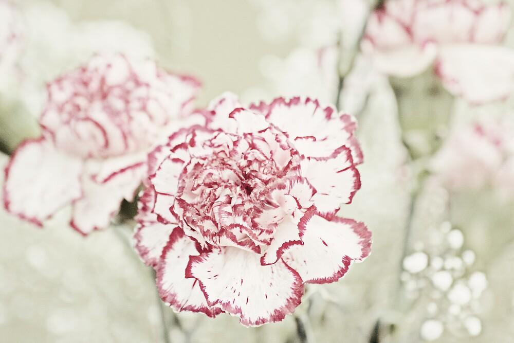 Vintage Carnations 2 by KarenMcWhirter