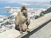monkey by darren  shaw