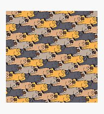 Pugs Tessellations Photographic Print