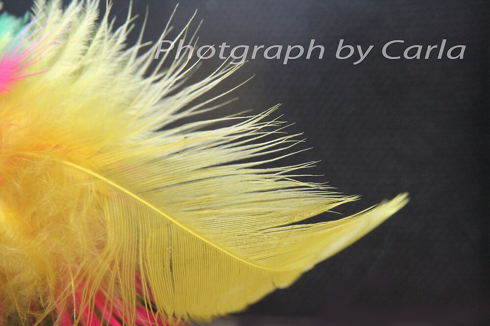 Feathers by Carlamarriott
