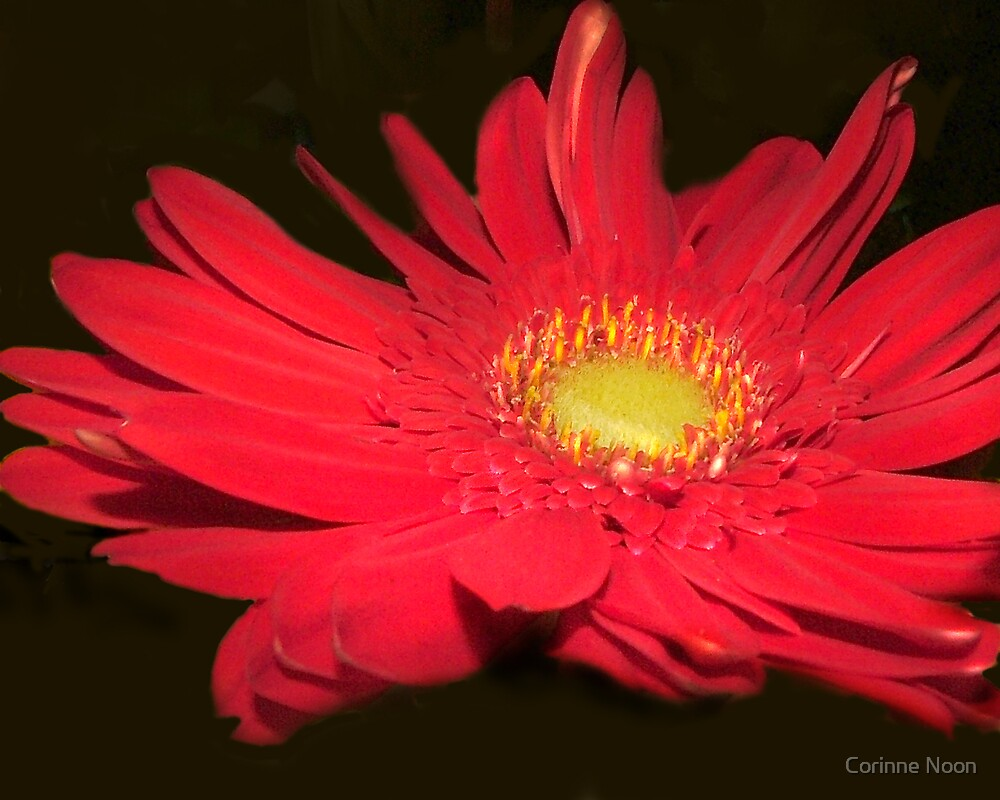 Red Flower by Corinne Noon