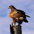 The Golden Eagle by Tim Harper