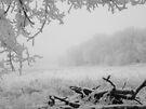 Winter Meadow by Dawne Olson