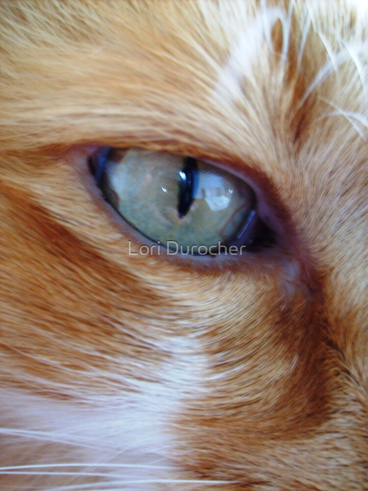 The eye of the Tiger by Lori Durocher
