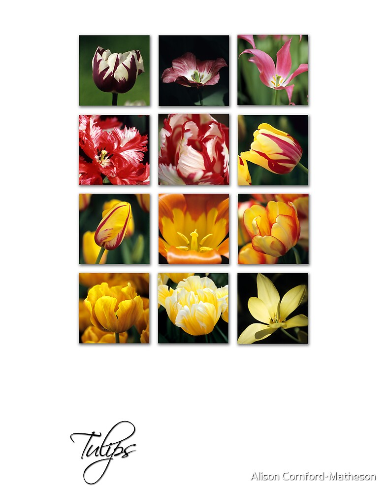 Tulips by Alison Cornford-Matheson