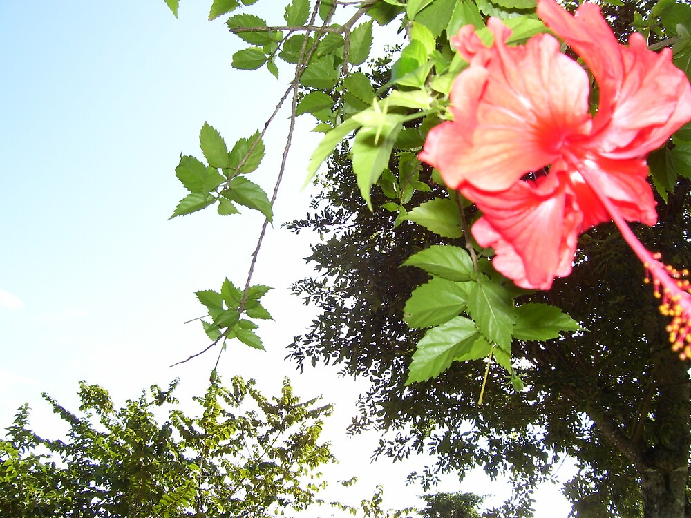 Cozumel flora by Christine Frydenborg Dargon