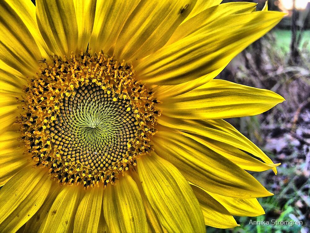 Sunflower by Annika Strömgren