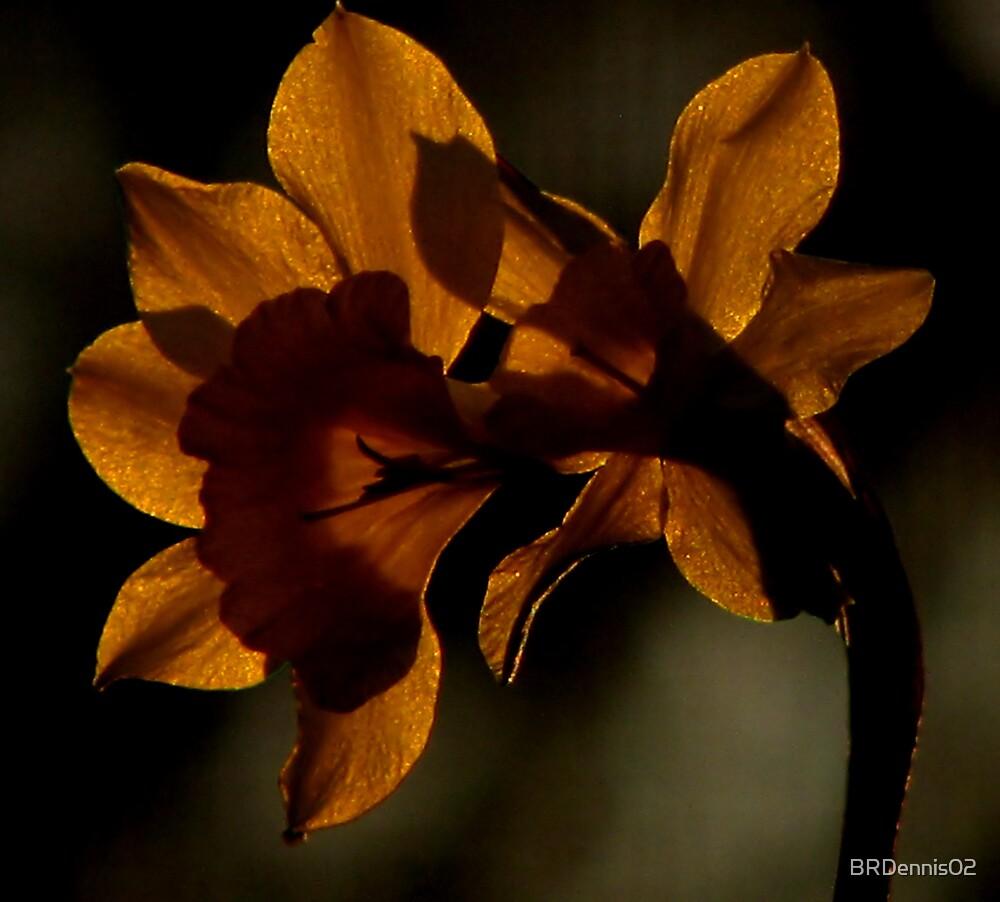 Twilight Daffodil by BRDennis02