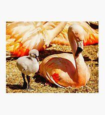 Flamingo and Baby Photographic Print