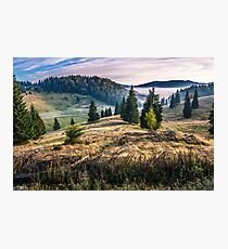 spruce forest on a hillside in foggy mountains at sunrise Photographic Print