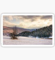 lonely tree on snowy meadow in winter mountains Sticker