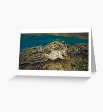 Tasselled Wobbegong - Camouflage on the Reef Greeting Card