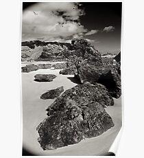 Osmiridium Beach Gulls 2 Poster