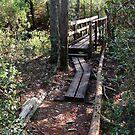 Creek Bridge by Jessie Harris