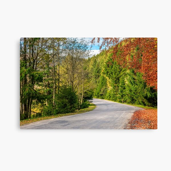 road through the forest in mountains Canvas Print