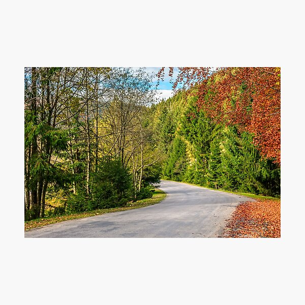 road through the forest in mountains Photographic Print