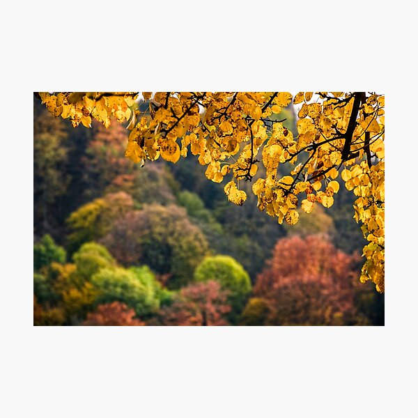 forest with colorful foliage on sunny autumn day Photographic Print
