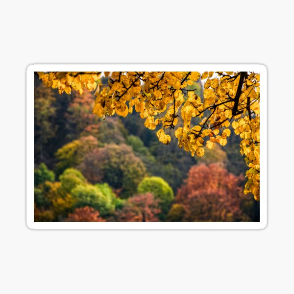 forest with colorful foliage on sunny autumn day Sticker