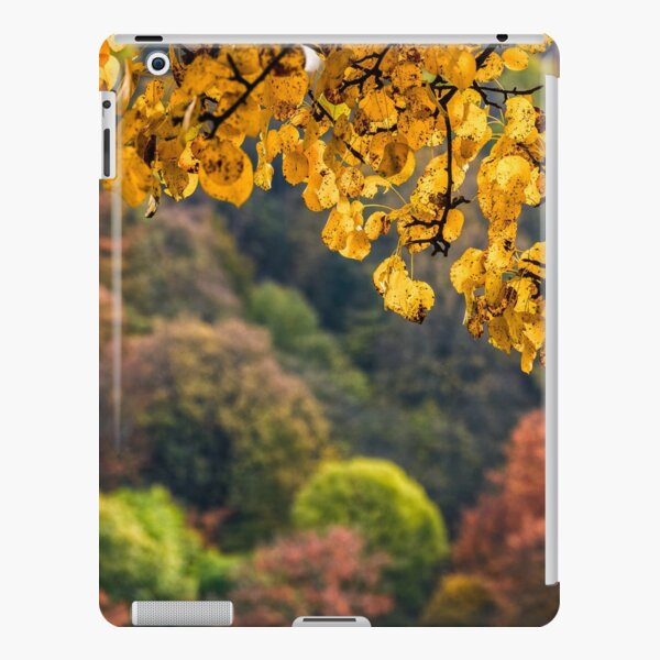forest with colorful foliage on sunny autumn day iPad Snap Case