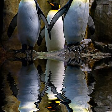 King Penguin, Antarctic, Montreal Biodome by Photograph2u