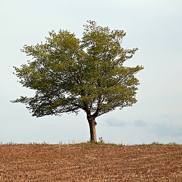 Lone Tree in Dry Land by Photograph2u