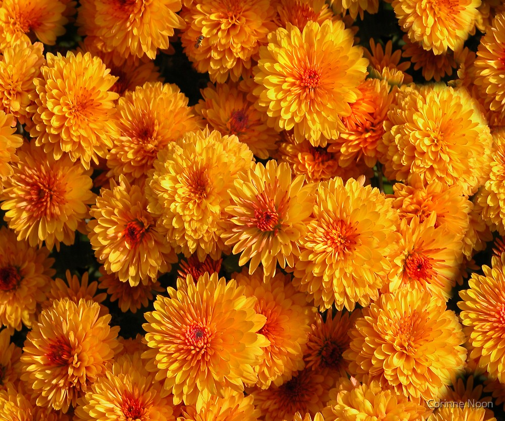 Mums by Corinne Noon