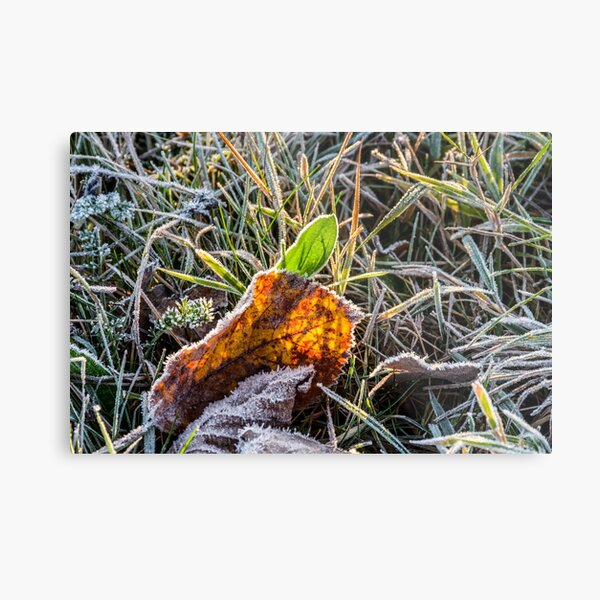 yellow and green foliage in the grass Metal Print