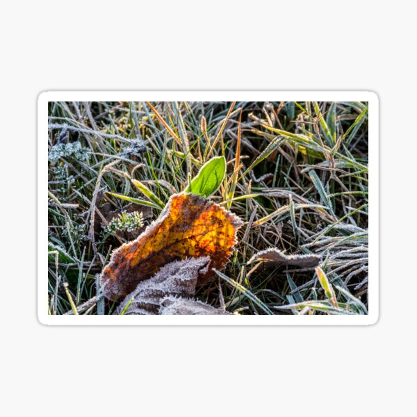 yellow and green foliage in the grass Sticker