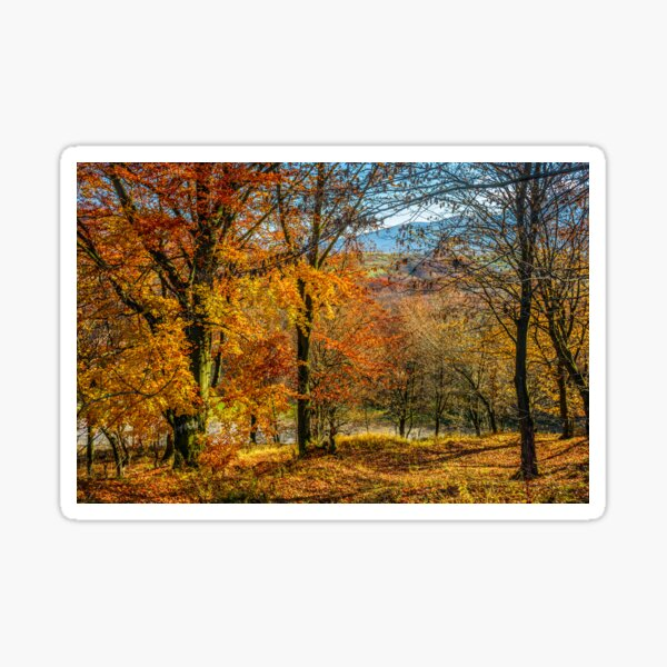 forest in red foliage on sunny autumn day Sticker