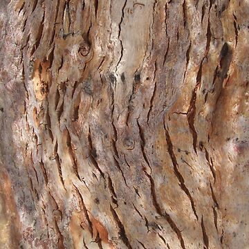 BARK, WOOD, Texture, Cracked, Tree, Nature, Natural by TOMSREDBUBBLE