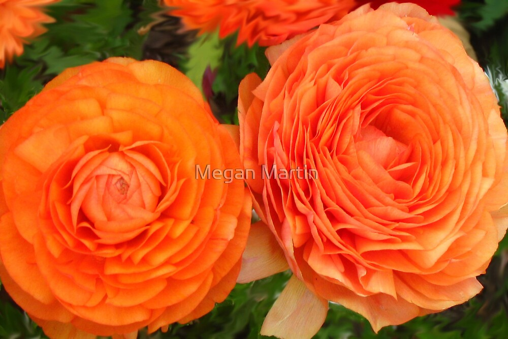 Orange Crush by Megan Martin