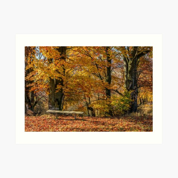 forest in red foliage on sunny autumn day Art Print