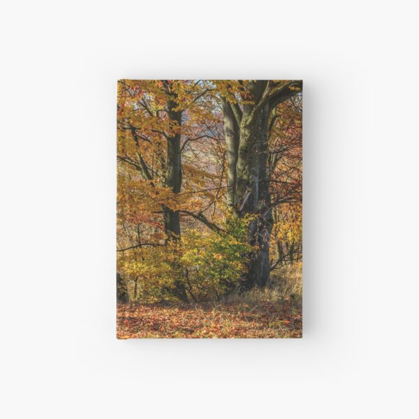 forest in red foliage on sunny autumn day Hardcover Journal