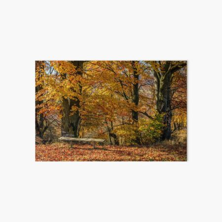 forest in red foliage on sunny autumn day Art Board Print