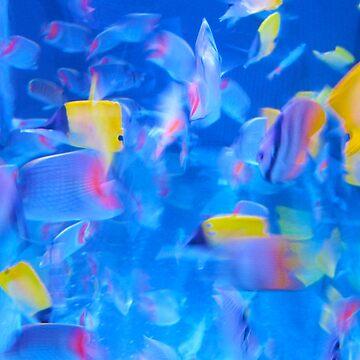 Blue Colourful Aquarium Photograph by Gabs2