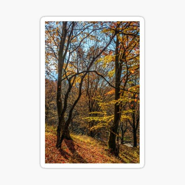 autumn forest in foliage Sticker