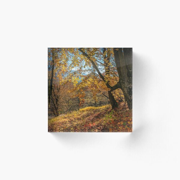 autumn forest in foliage Acrylic Block
