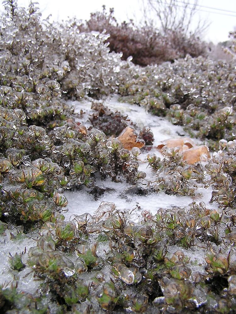 Icy Morning 2 by Christine Frydenborg Dargon