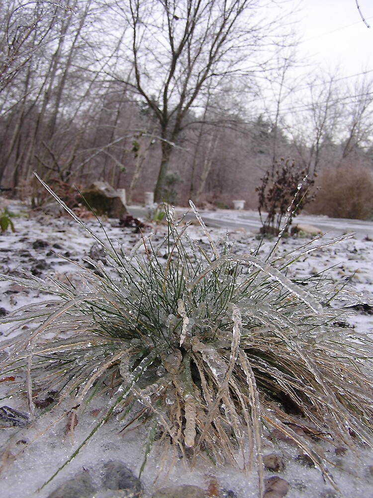 Icy Morning 3 by Christine Frydenborg Dargon